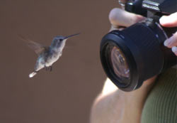 Penny taking picture of a Humming Bird