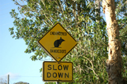 Bandicoots crossing sign