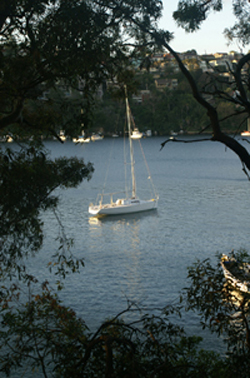 A boat in Sydney Harbor