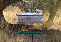 Hummingbird Trapping Station
